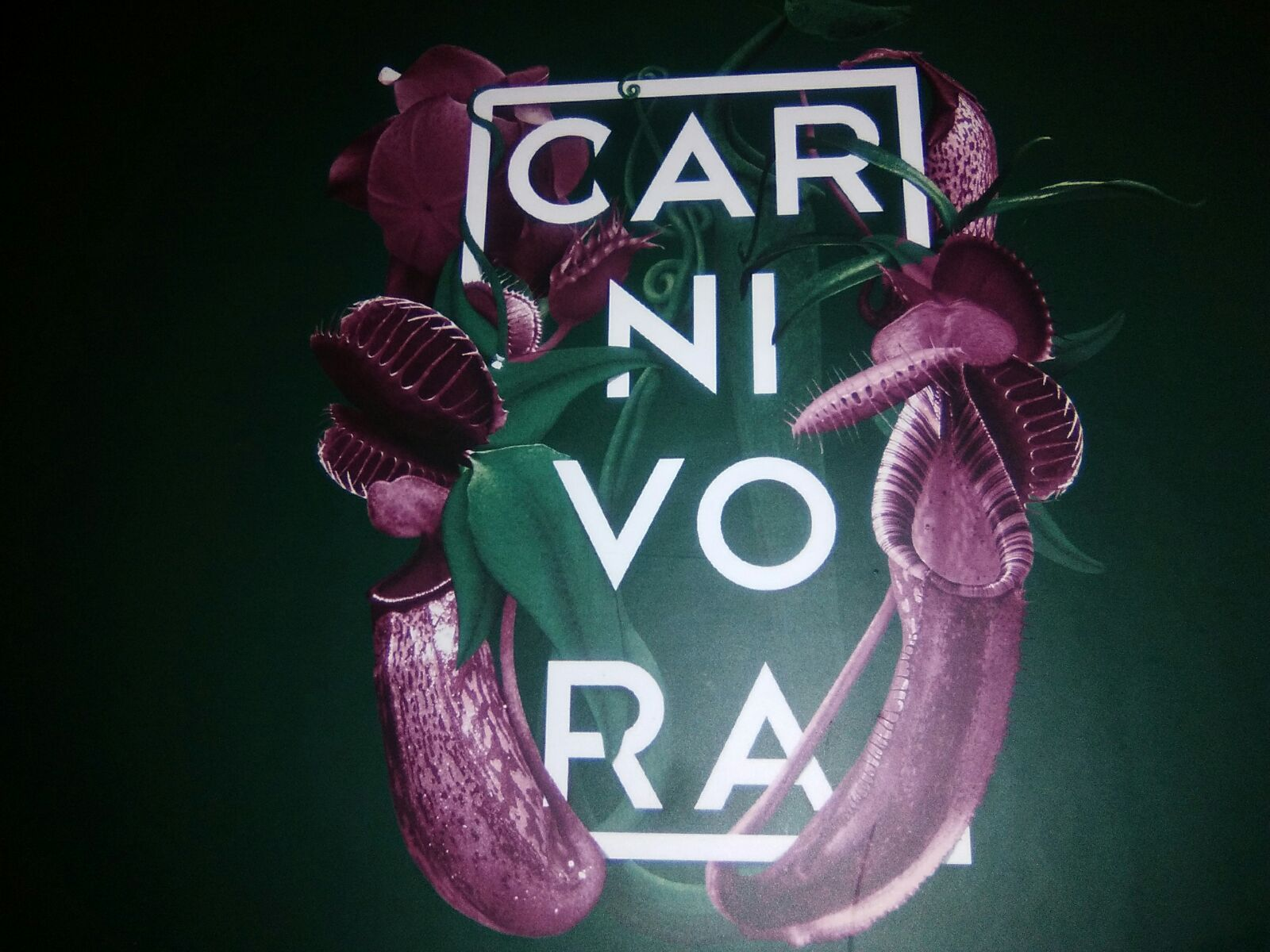 Carnivora Restaurante